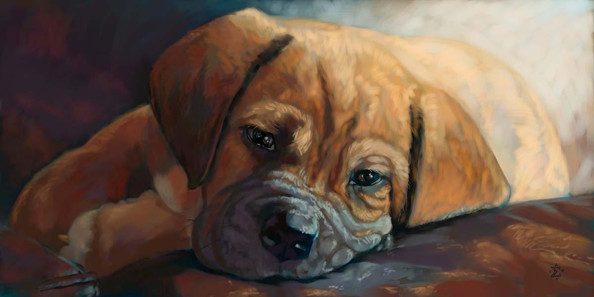 Hudson puppy portrait