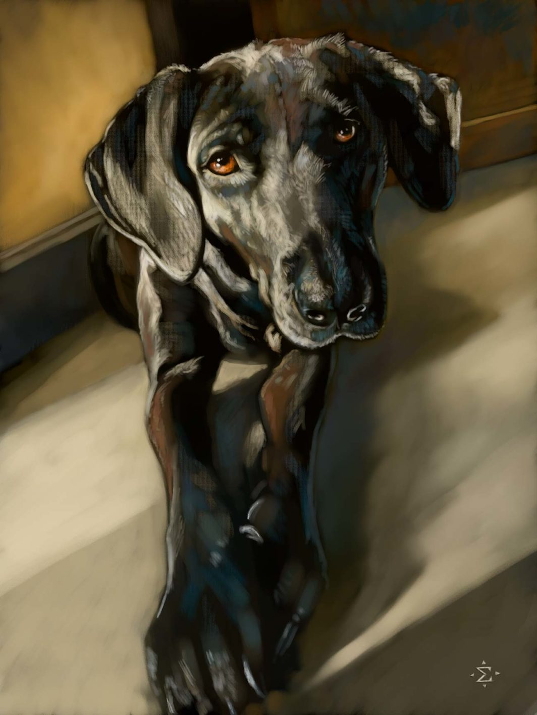 Bailey pet portrait