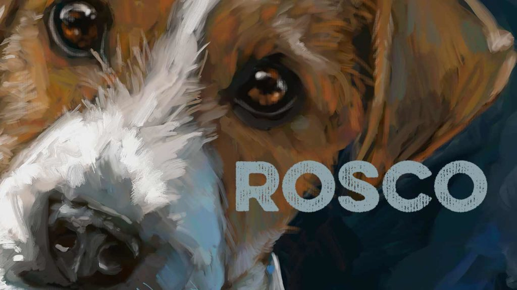 rosco dog portrait