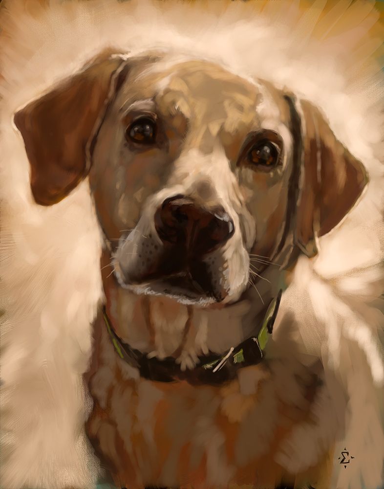 pet portrait of Scout