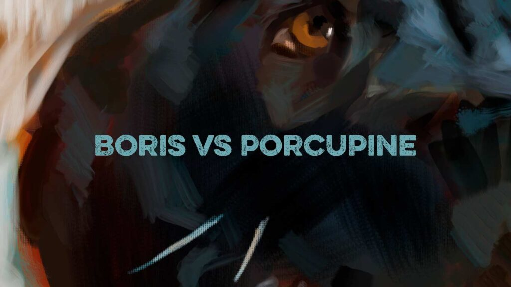 boris porcupine feature image