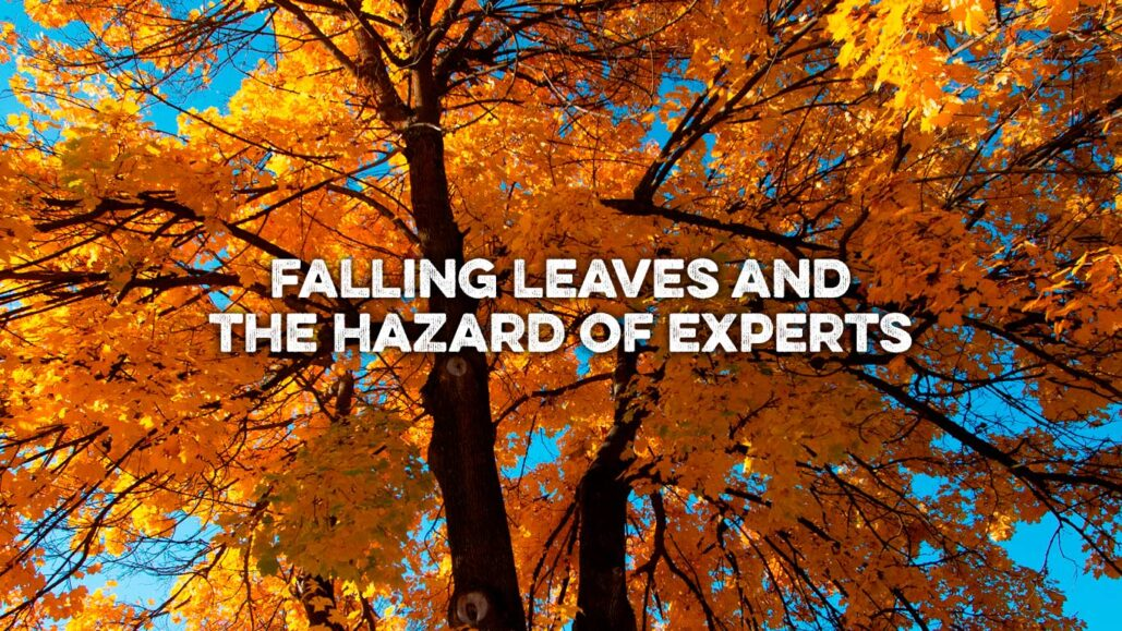 falling leaves feature