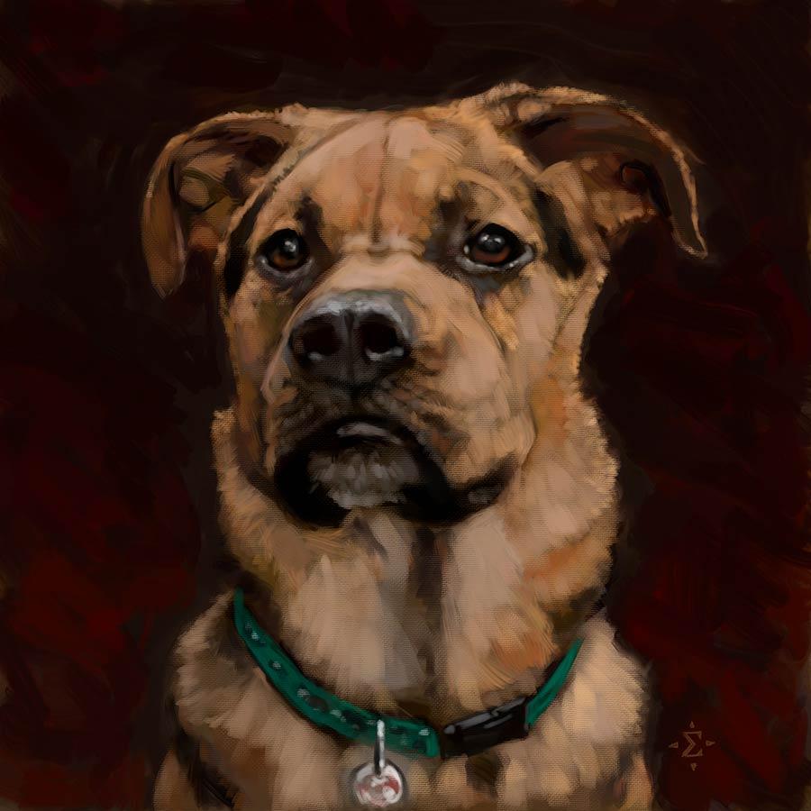 dog portrait Brooks