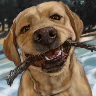dog portraits max