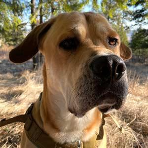 Hudson ready to hike